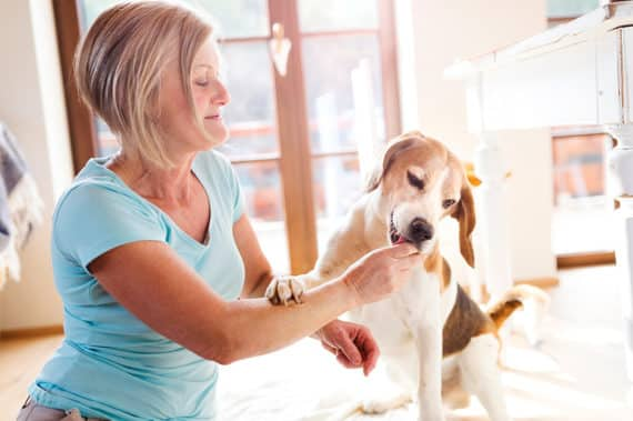 Wie wirksam sind Heilsteine für Haustiere?